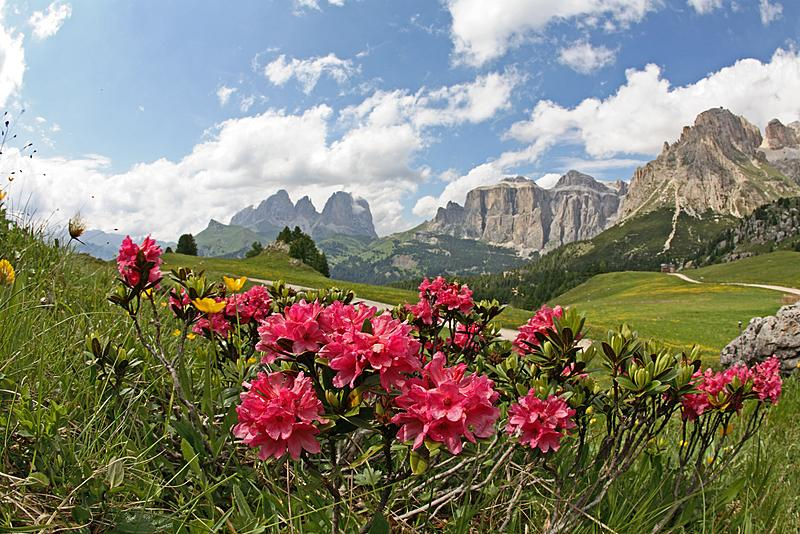 Estate in Val di Fassa